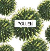 Detroit Furnace offers air filters for your home in Clinton Township MI to fight pollen.